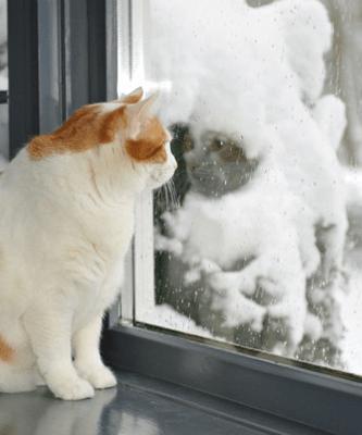 тепло за пластиковыми окнами